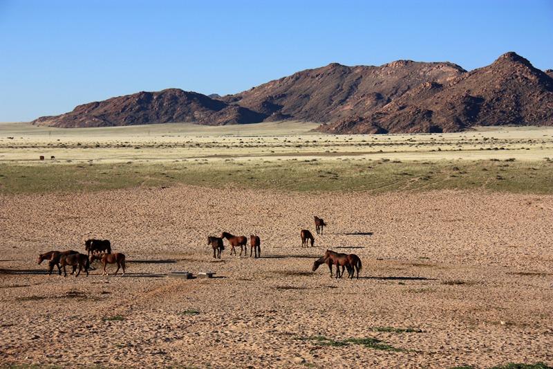 20/05/11 - Aus - Chevaux du désert